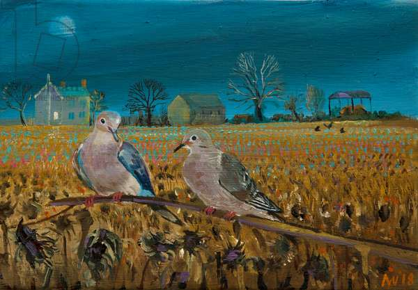 collared Doves (oil on canvas)