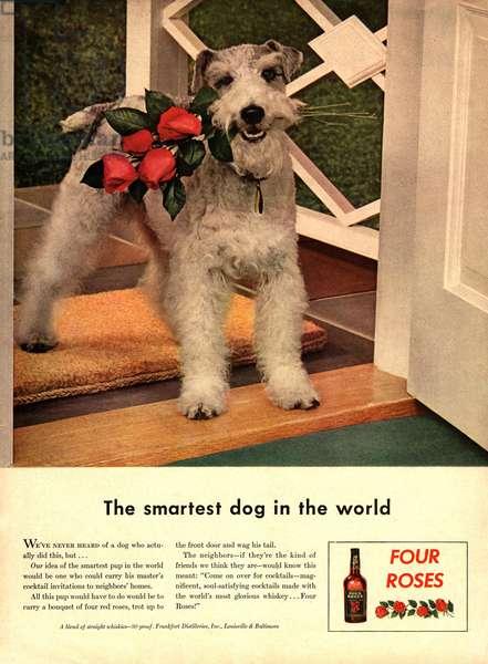 Four Roses Magazine, advert, USA, 1950s