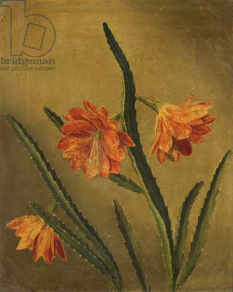 Study of Flowers (oil on canvas)