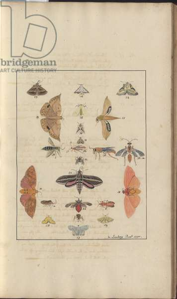 Lindsay Drawings Vol. VI, 68, 1750-79 (w/c on paper)