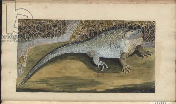 Lindsay Drawings Vol. VI, 141, 1750-79 (w/c on paper)