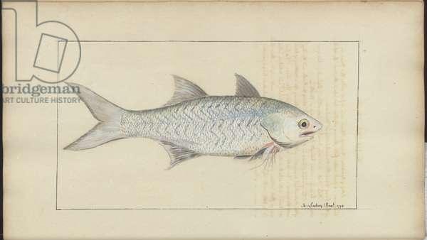 Lindsay Drawings Vol. VII, 18, 1760-1780s (w/c on paper)