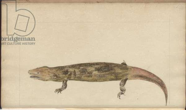 Lindsay Drawings Vol. VI, 144, 1750-79 (w/c on paper)