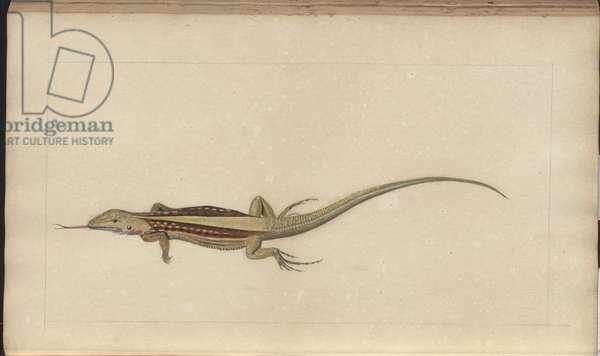Lindsay Drawings Vol. VI, 147, 1750-79 (w/c on paper)
