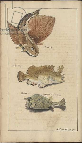 Lindsay Drawings Vol. VII, 15, 1760-1780s (w/c on paper)