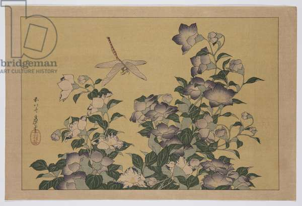 Bellflower and Dragonfly (colour woodblock print)