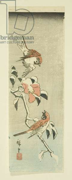 Sparrows and Camellia in Snow (colour woodblock print)