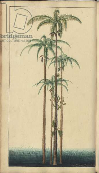 A page from the 'Elegancies of Jamaica', 420, 1750-79 (w/c on paper)