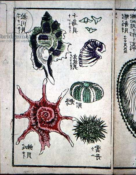Page from Japanese Shell Collector's Handbook (19th century)