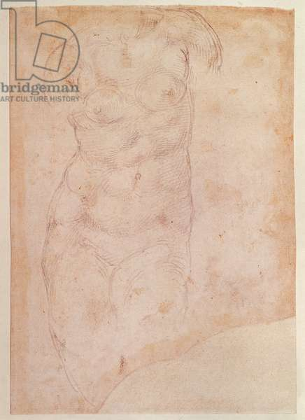 Study of a Female Nude (black chalk on paper)