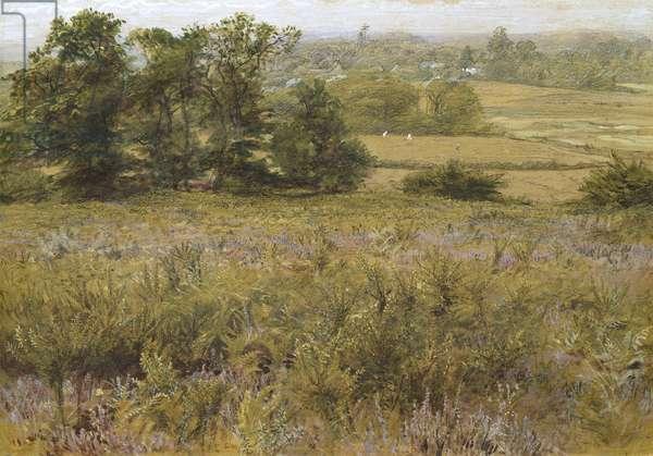 The Furze Field, 19th century (watercolour)