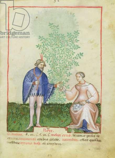 Nouv Acq Lat 1673 fol.83 Roses, from 'Tacuinum Sanitatis', c.1390-1400 (vellum)