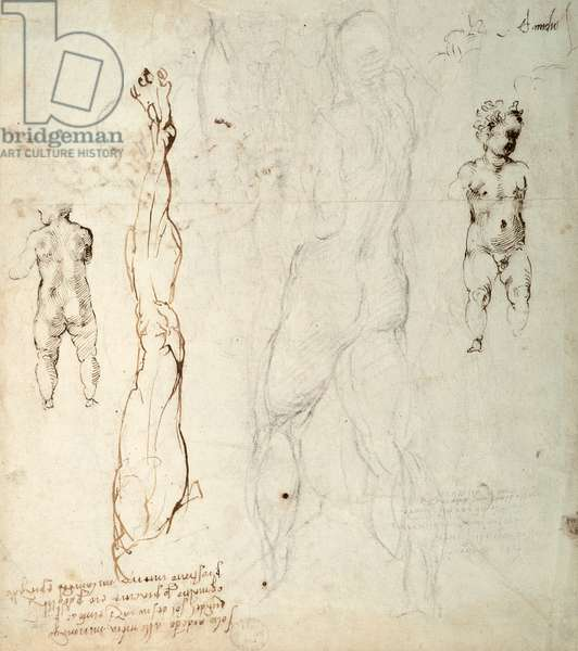 Study of the Christ Child and an Anatomical Drawing with Notes (black chalk & brown ink on paper) (verso)