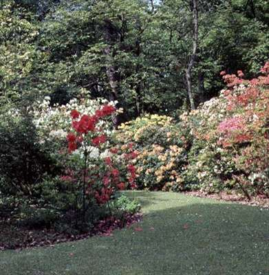 Borde Hill Gardens, Haywards Heath (photo)