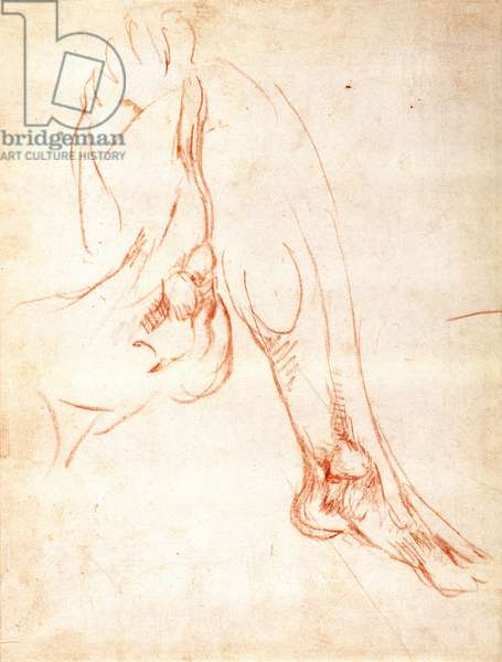 Study of a lower leg and foot (red chalk on paper) (recto)