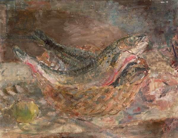 Study of Salmon