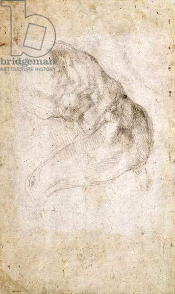 Study for The Creation of Adam (black chalk on paper) (verso) (for recto see 191766)