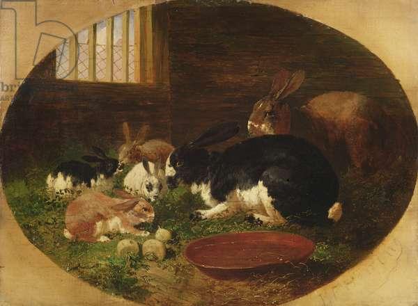 The Rabbit Hutch