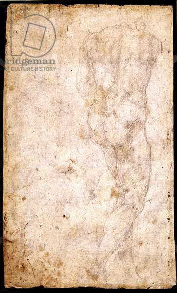 Study of a Male Nude (chalk on paper) (recto) (for verso see 191765)