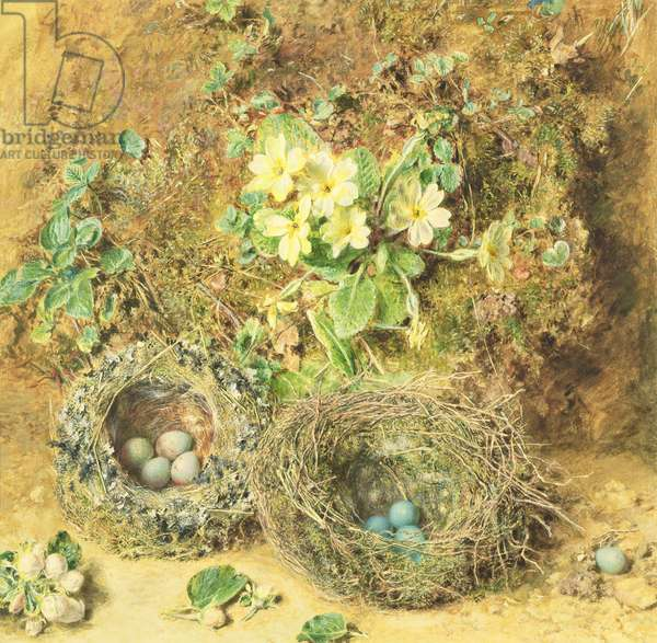 Primroses and Birds' Nests (w/c on paper)
