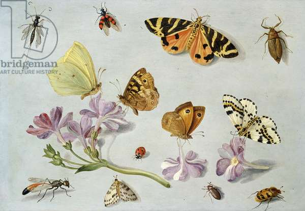 Butterflies, moths and other insects with a sprig of periwinkle (oil on copper)