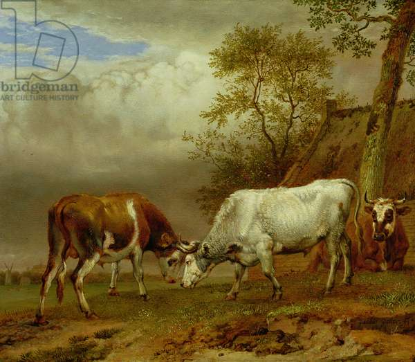 Two Bulls with Locked Horns, 1653 (oil on board)