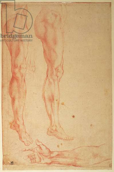Studies of Legs and Arms (red chalk on paper)