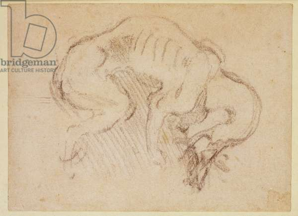 Study of a dog (charcoal on paper) (recto)