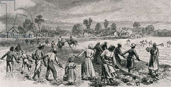 Labour in the Cotton Fields, Hoeing the Young Plants, illustration from 'Harper's Weekly', 1867, from 'The Pageant of America, Vol.3', by Ralph Henry Gabriel, 1926 (engraving)