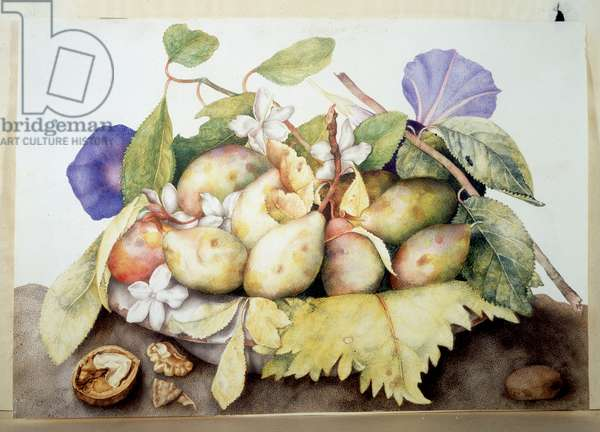 Plums, walnuts and flower of bindweed