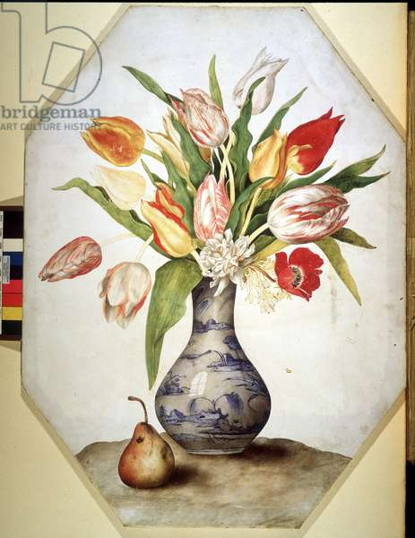 Tulips and pears still life