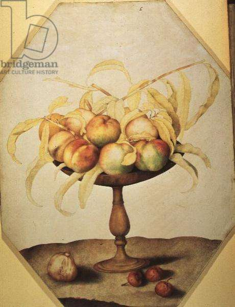 Bowl of Peaches (tempera on vellum)
