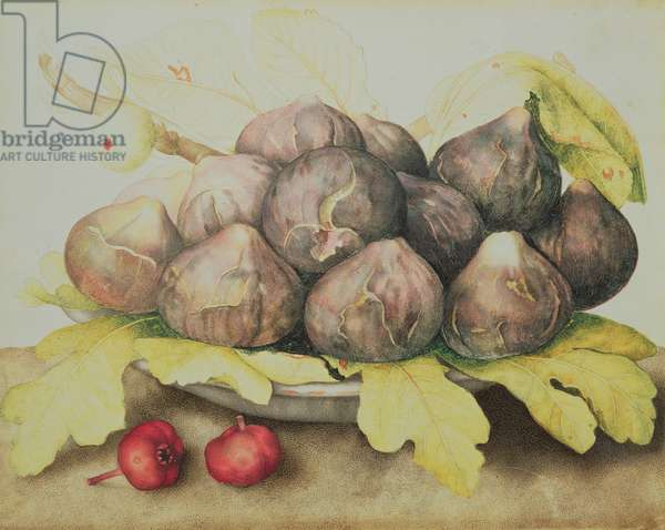 Figs (oil on canvas)