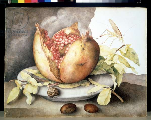 Pomegranates, chestnuts and slug.