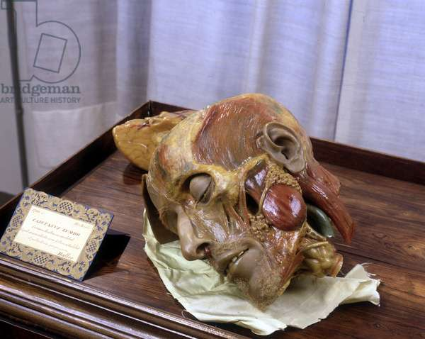 Decomposing head modeled after a real crane in wax