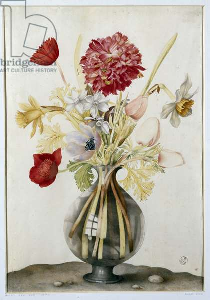 Vase of Flowers with Daffodils, Carnations and Anemones (w/c on parchment)