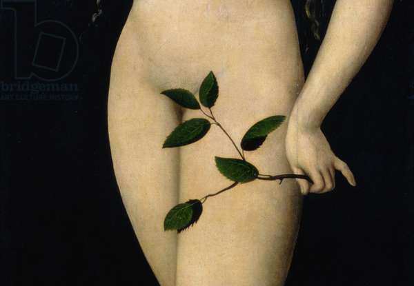 Eve, 1528 (oil on panel) (detail of 9629)