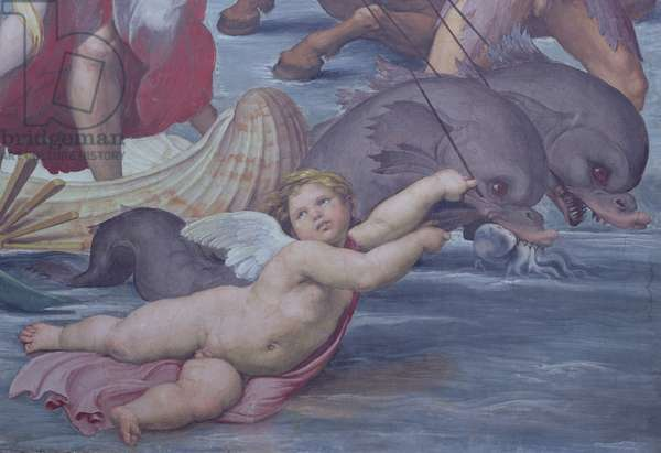 Galatea, detail of putto and dolphins, 1506 (fresco) (detail of 56473)