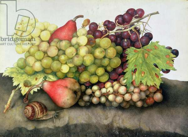 Snail with Grapes and Pears (w/c on parchment)
