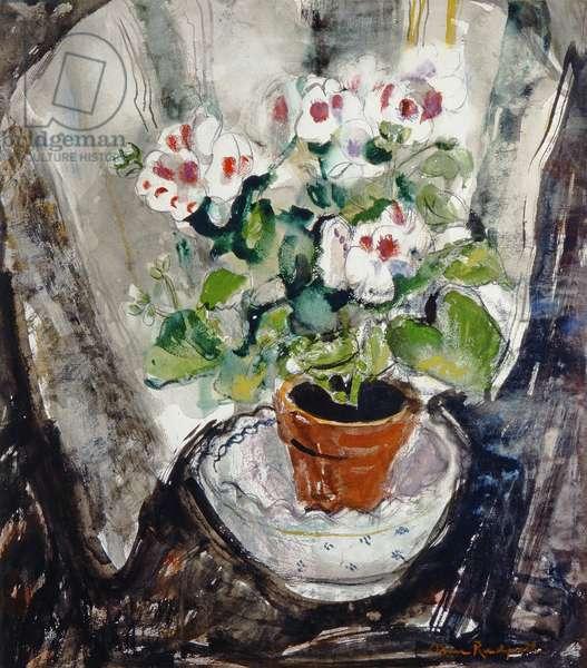 Pelargonium (watercolour on paper)