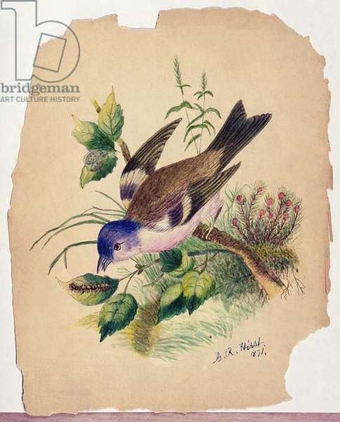 Bluebird on a Branch, 1871 (w/c on paper)