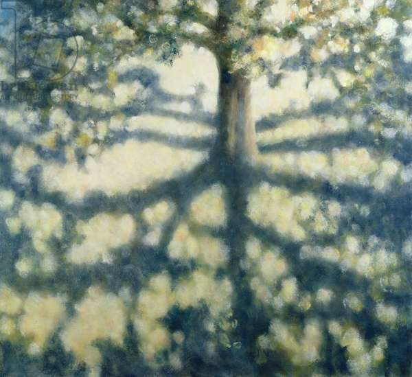 Tree with Shadows, 2008 (oil on canvas)