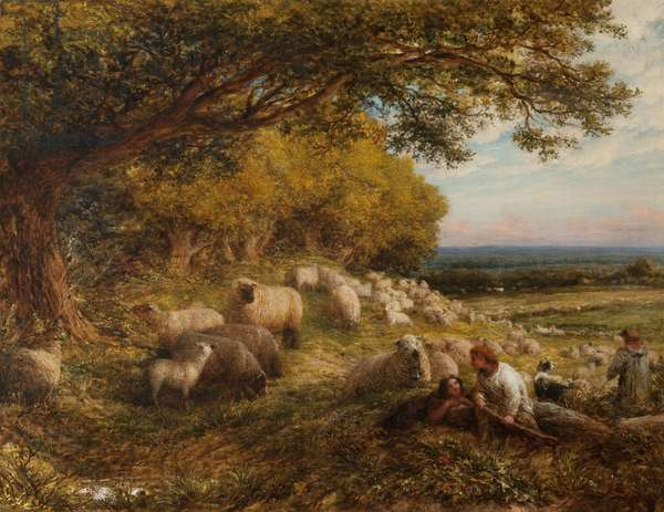 Sheep, 1867 (oil on canvas)