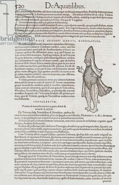 An illustration of the aquatic bishop