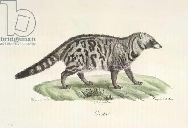 Civette, from Histoire Naturelle des Mammifères (colour litho)