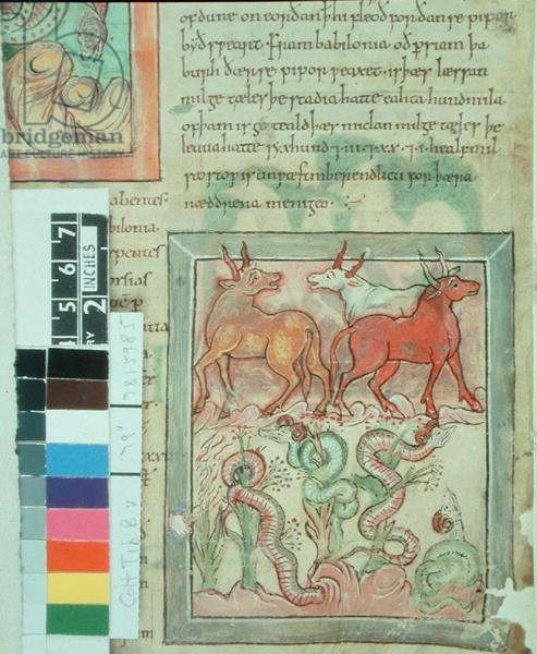Cotton Ms Tiberius B V I  fol.87v  Long-horned asses and serpents guarding peppers (vellum)