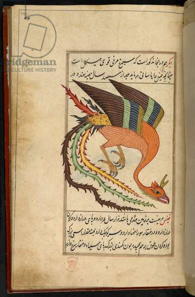 The simurgh, an Iranian thunderbird. A treatise on the wonders of Natural History, with numerous colored drawings; written in the 42nd year of the Emperor Alamgir [A. D.  1700].