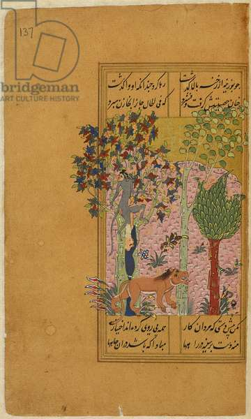 The monkey looks for the lion's rider up in the tree and is caught and killed by Sal'uk