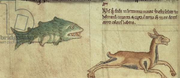 Royal Ms 13 B viii  fol.16v  A fish and a deer with golden teeth (vellum)