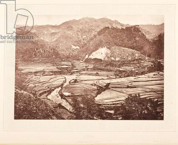 Plate opposite 31, Java, Paddy fields, from 'The Rambles of a Globe Trotter in Australia, Japan, China, Java, India, and Cashmere', by  Egerton K Laird, 1875 (b/w photo)